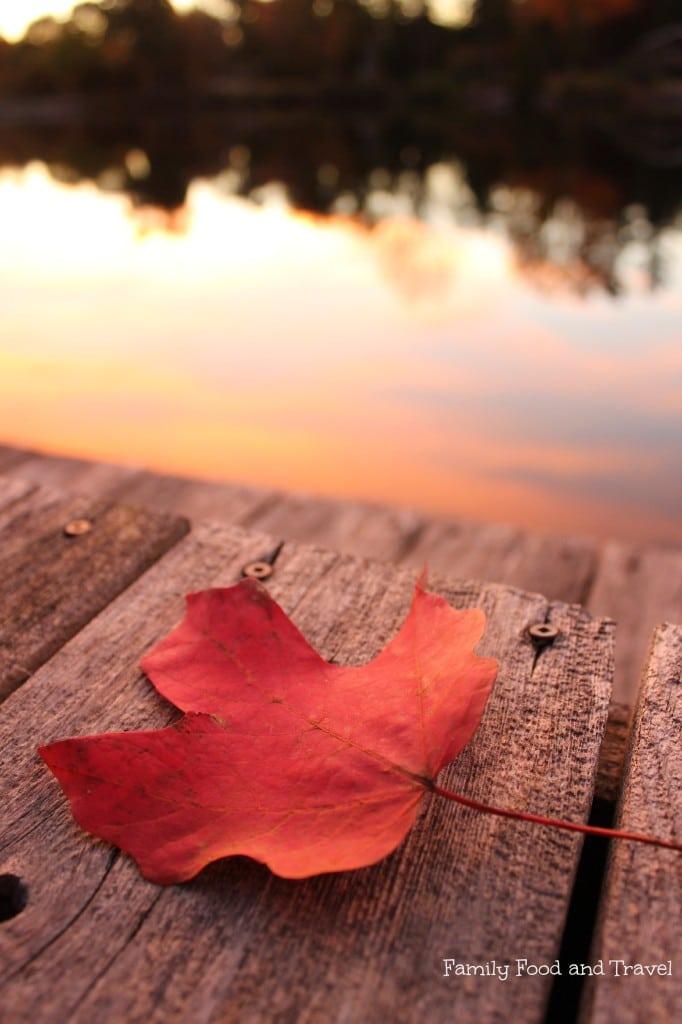 beauty of fall