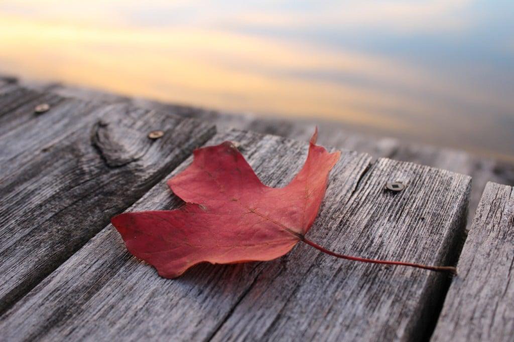 Maple Leaf Canada Fall