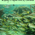 Visiting Ripley's Aquarium of Canada – Toronto, ON
