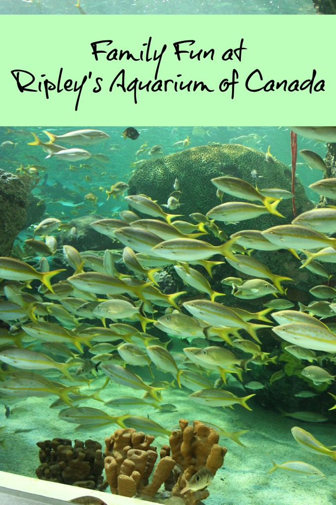 ripley's aquarium of Canada Toronto