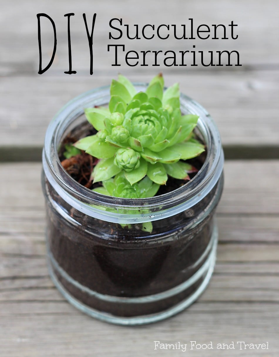 Diy Succulent Terrarium Family Food And Travel