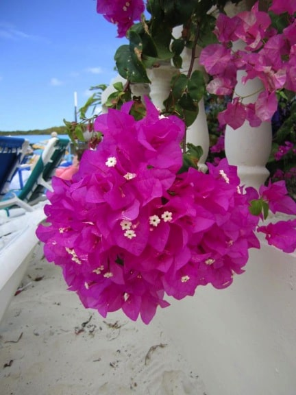 flowersbahamas