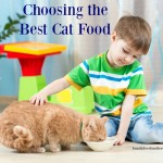 Choosing the Best Cat Food For Samson