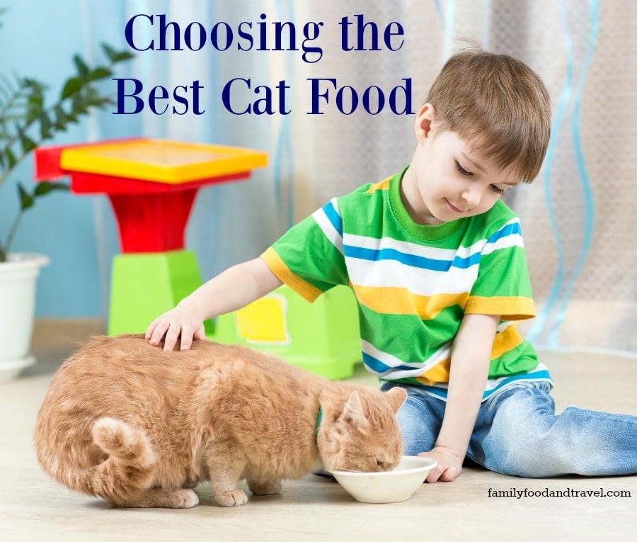 Choosing the Best Cat Food For Samson