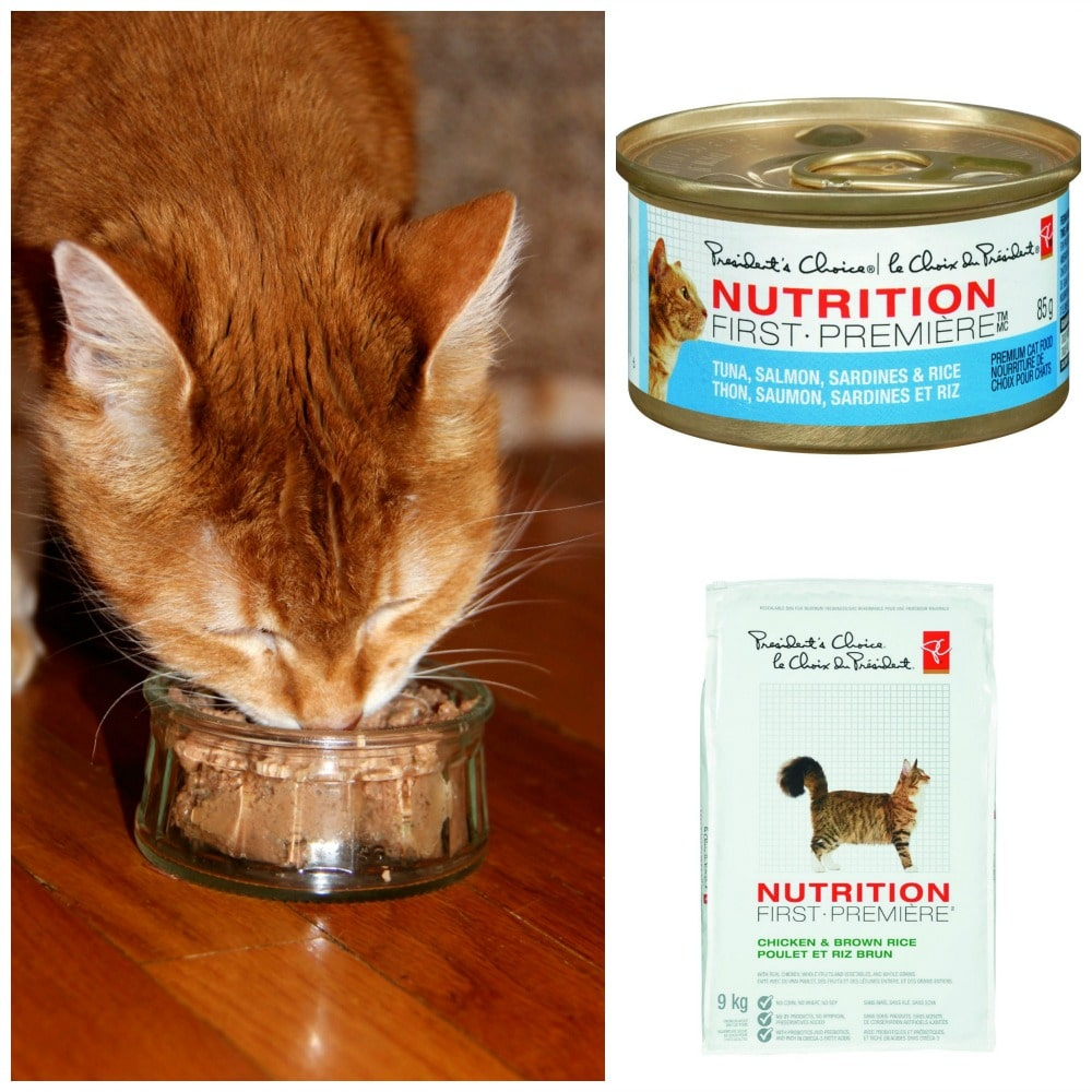 Best Cat Food Easy Digestion
