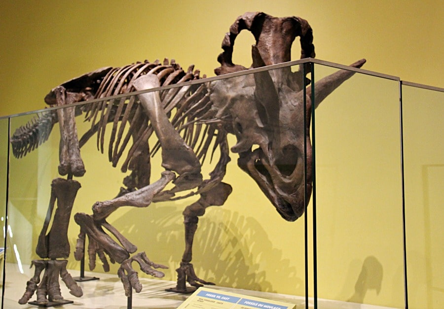 Royal Ontario Museum a Must-Visit Toronto Attraction