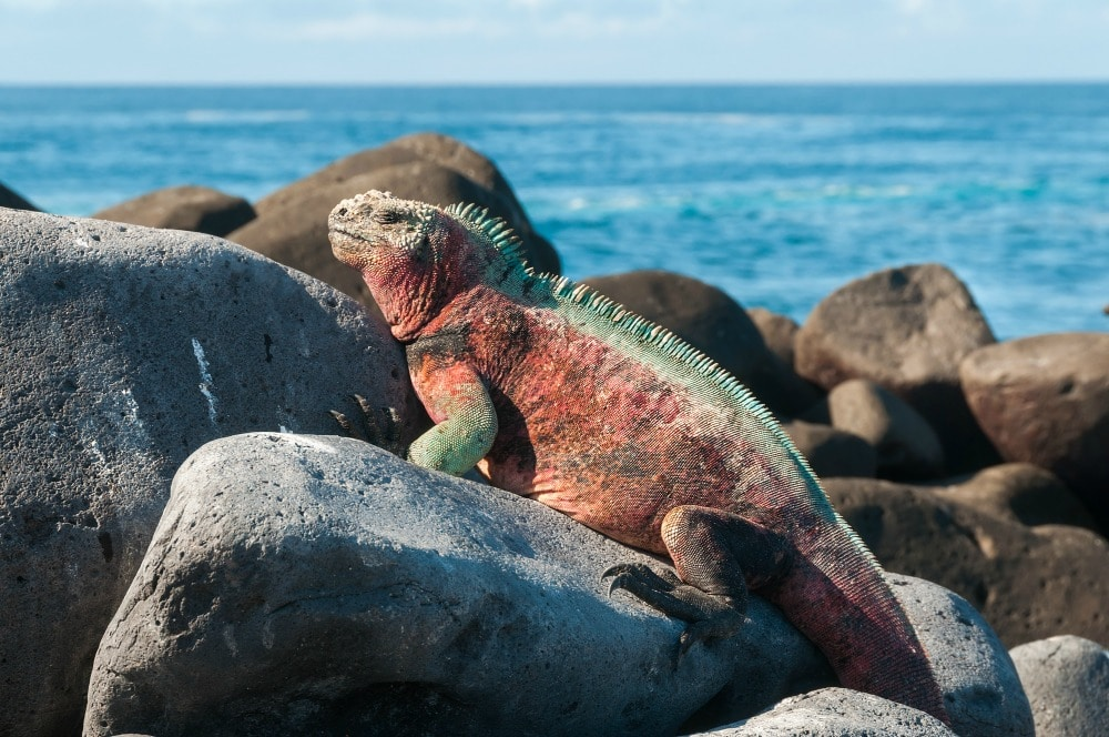 Galapagos - Best Family Vacations