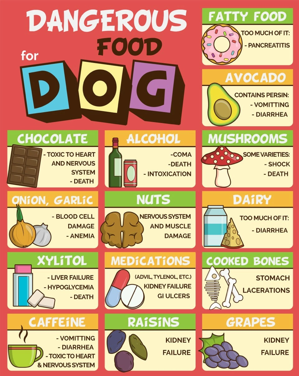 Dog Food Healthy Brands
