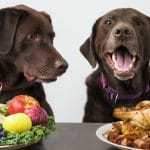 15 Foods Dogs Should NOT Eat