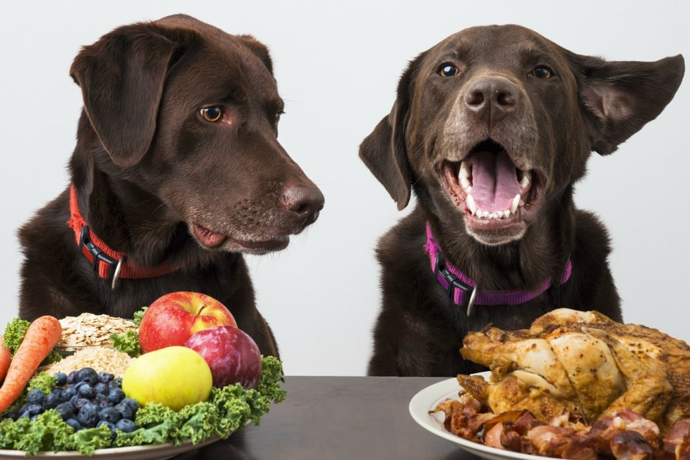 Food Dogs Should Not Eat