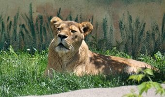 Tips for Visiting the Rosamond Gifford Syracuse Zoo