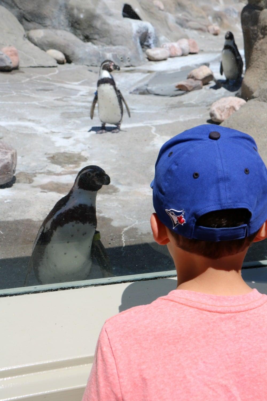 Syracuse Zoo - Penguins