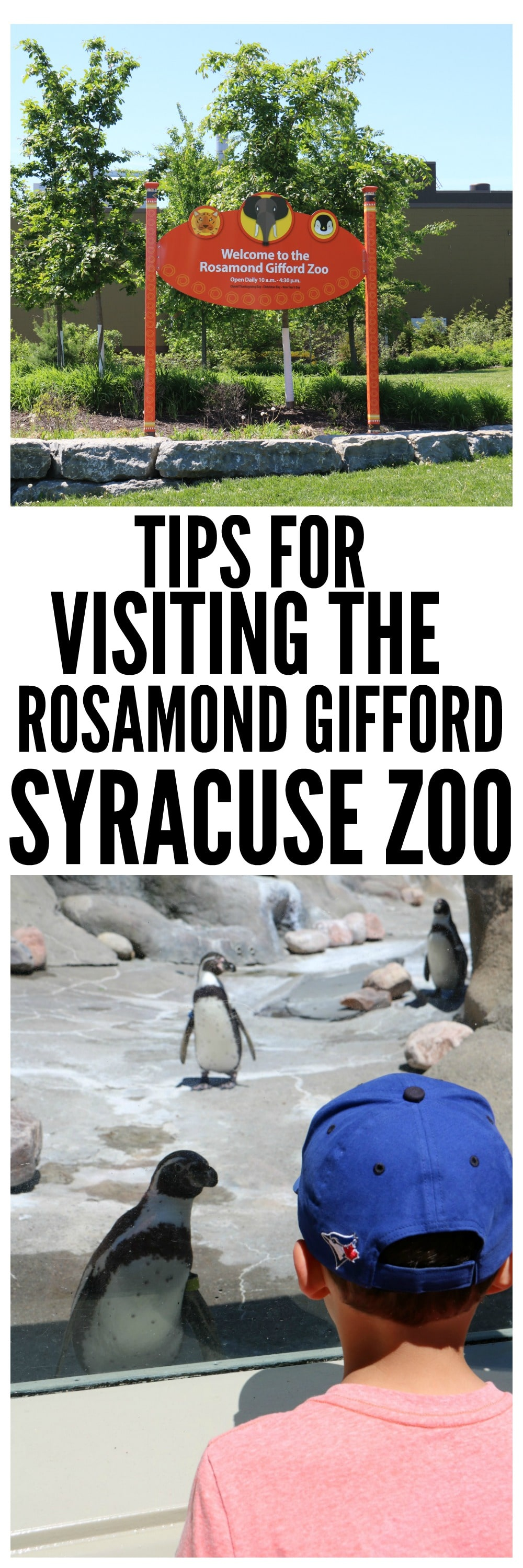 Visiting the Syracuse Zoo