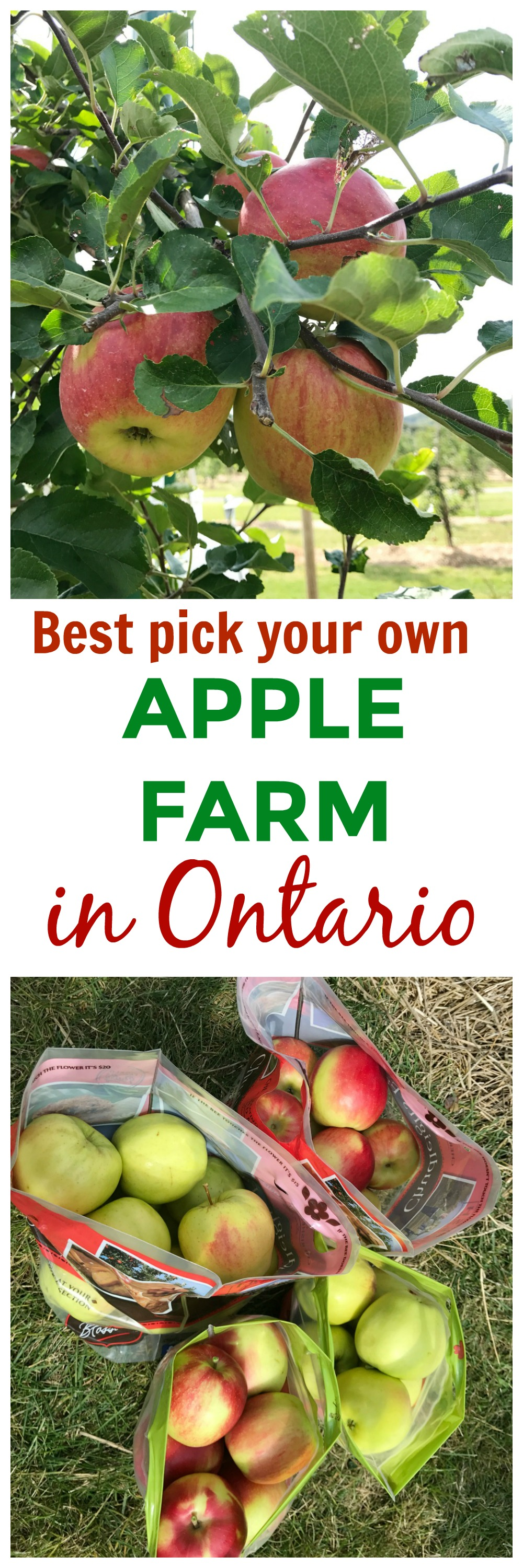 BEST APPLE FARM