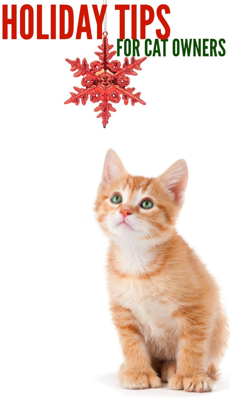 Holiday tips for Cat Owners