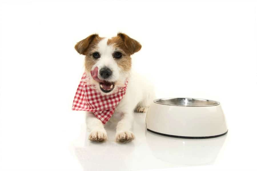 Safe Foods for Dogs - can dogs eat beans
