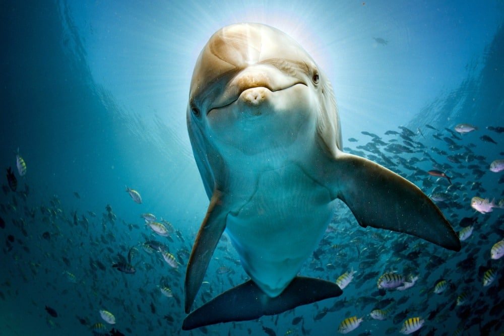 Dolphin and Ocean Facts